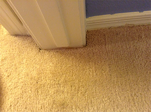 Damaged Carpet Repaired