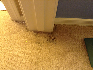 Damaged carpet repair